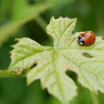 ladybug-5365840_640